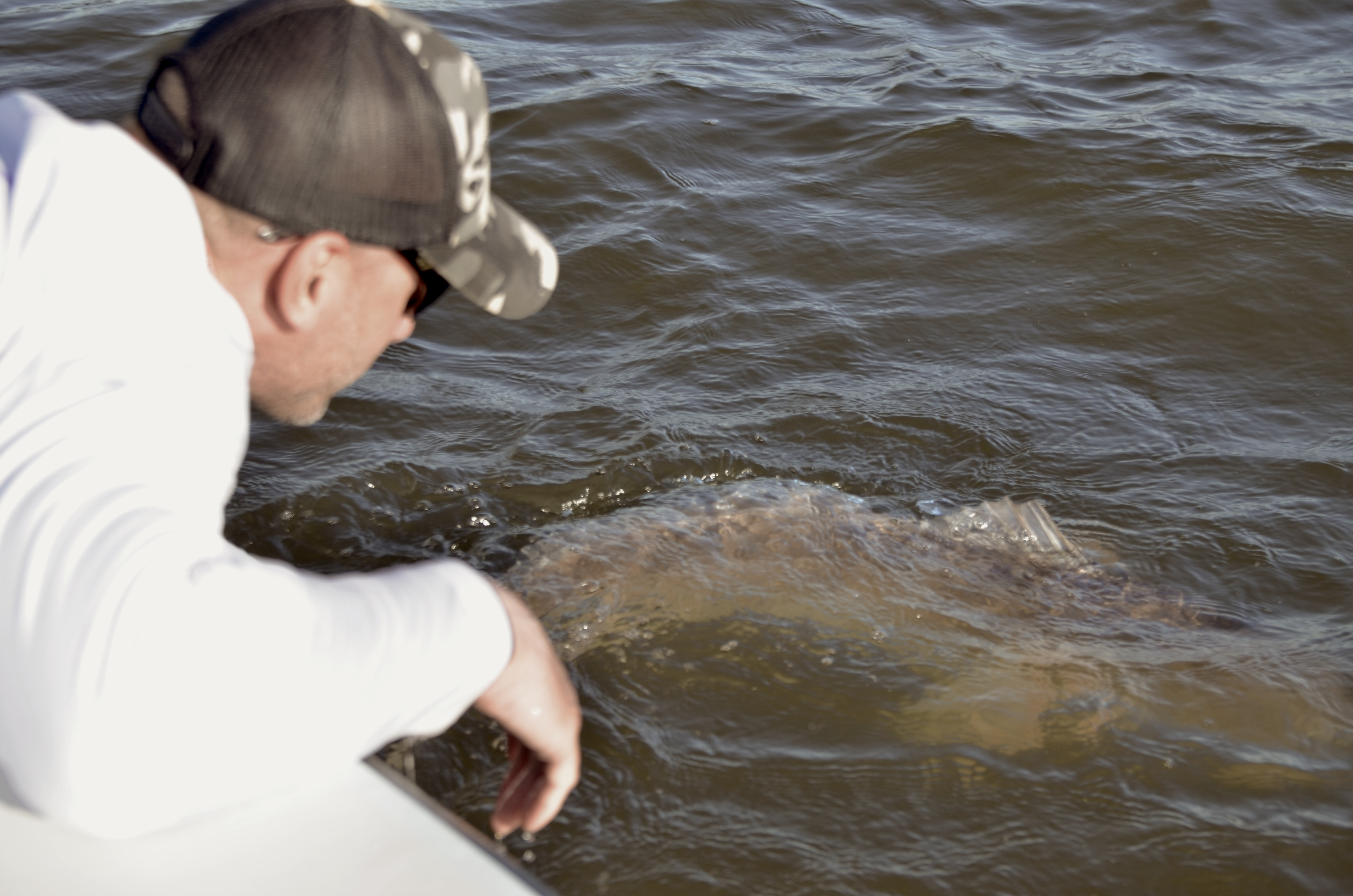Louisiana redfish on fly slow low coastal outfitters for Fly fishing new orleans