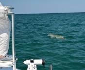Tarpon Fishing Charter | Port St. Joe, FL | Slow & Low Coastal Outfitters