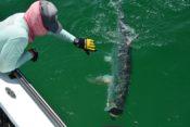 Tarpon Fishing 30A