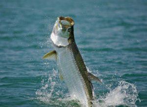 Tarpon Fishing Guide | Port St. Joe, FL | Slow & Low Coastal Outfitters