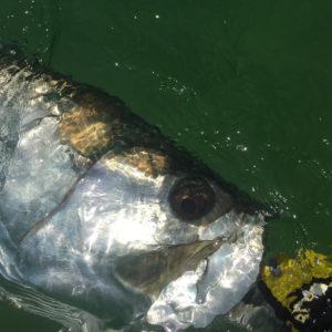 DESTIN FLY FISHING GUIDE