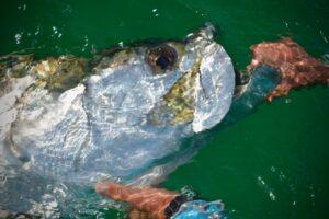 SANTA ROSA BEACH TARPON FISHING