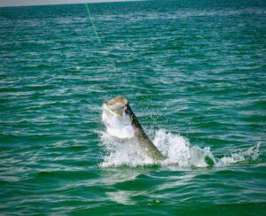 30A FISHING CHARTERS